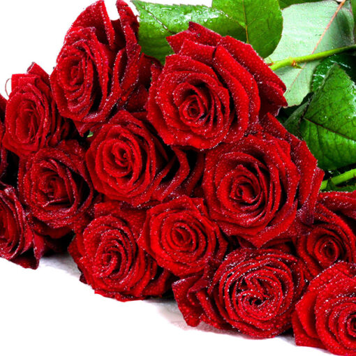 Fascio 24 rose rosse a stelo lungo